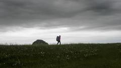 Flower Field (newzild) Tags: new zealand mercer te araroa field flowers farm haystack hiker tramper backpack landscape clouds grass paddock micro four thirds m43 panasonic gm5 1232