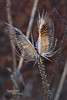 "MAGIC HOUR Landscape in Late Autumn/Fall at Duke Farms of Hillsborough NJ (takegoro) Tags: ""duke farms"" ""nature preserve"" nature hillsborough ""new jersey"" fall autumn landscape meadow grass native ""magic hour"" ""golden sunset"