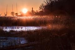 huron marsh sunrise (Christian Collins) Tags: frozen marsh michigan midmichigan lake huron baycity statepark mi sunrise backlight rimlight canoneos5dmarkiv glowing dusters weeds trees sun sol