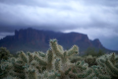 sOLACE sOUGHT iN a sONORAN sTORM 16 (wNG555) Tags: 2017 apachejunction apachetrail superstitionmountain superstitionwilderness sonorandesert desert cactus sky storm clouds winter olympusfzuikoautos38mmf18 arizona phoenix
