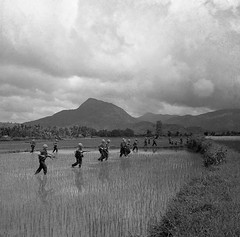Vietnam War 1965 - A group of American soldiers wade across a rice paddy in Vietnam. (manhhai) Tags: agriculturalfield agriculture americanarmedforces americans armedforces army asia asianhistoricalevent battle cropland farmscenes group historicevent infantry irrigatedfield males military militarypersonnel mountain northamericanhistoricalevent people ricepaddy ruralscenes soldier southeastasia unitedstateshistoricalevent unitedstatesofamerica vietnam vietnamwar19591975 vietnamesehistoricalevent war