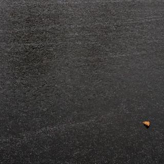Oak Leaf on Ice