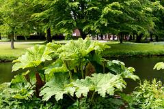 _DSC3757 (durr-architect) Tags: park trees plants plant flower colour tree water garden pond estate outdoor country bridges hague foliage pavilion serene sculptures cask the clingendael