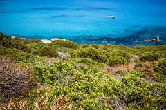 Macchia mediterranea (matta.eu) Tags: sardegna canon mediterraneo mare villasimius sigma colori macchiamediterranea canon50d eugeniomatta