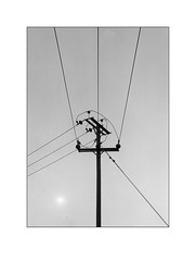 Telephone pole (Chiltern Snappers) Tags: blackandwhite sun post graphic perspective 85mm symmetry wires 35mmfilm symmetric fujifilm telegraphpole telephonepole nikonfe minimalist colournegative woodenpole nickmatthews