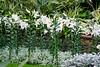 CW175 Longwood Gardens Flowers (listentoreason) Tags: usa white plant flower color nature america canon unitedstates pennsylvania favorites places longwoodgardens magnoliophyta angiosperm ef28135mmf3556isusm score30 plantpart