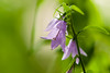 ILCE-6000_2015165_DSC00005 (Sicong (OFF for a while)) Tags: flower green nature fleur plante dof bokeh sony jardindesplantes a6000 sal135f18za sonnart18135 laea2