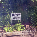 Buses Only thumbnail