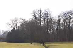 Botanical Garden (noeminiesta) Tags: brussels naturaleza tree verde green nature forest garden botanical arbol nikon arboles belgium natural jardin belgië bruxelles arbres environment botanic february botanique arbre febrero verd 3100 fevrier fôret 2015 nikonistas nikond3100