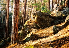 Stony Owl's waiting (Serg Autumnoff) Tags: sunset summer film sunshine rock stone pinetree pine forest 35mm landscape moss sundown outdoor superia owl ravine comb hollow pinery fujifilmsuperiaiso200 samarskayaoblast   sergautumnoff autumnoff  racheyskieskali totemofthewood