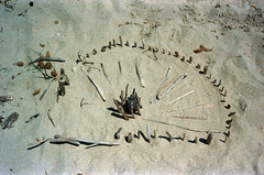 Beach art (schoeband) Tags: france film beach sand frankreich corse corsica analogue fr korsika c41 canonetgiiiql17 coggia revologstreak