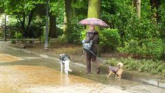 18 05-2013 010 (Jusotil_1943) Tags: 18052013 bordillos lluvia perros paraguas