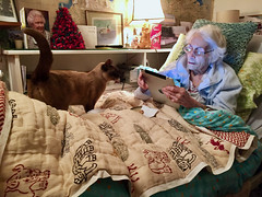 Another lazy day (zanypurr) Tags: centenarian old lady bed burmese cat odc simplepleasures ipad jaipurquilt queen