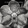 Flower black and white. (tomquah) Tags: macromonday macro closeup orchid flowers tomquah bw blackwhite canon5d 100mm