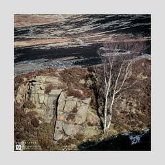 appearance - The Sketches # 36 (Stuart Leche) Tags: heather hiking millstoneedge path peakdistrict rocks shadow silverbirch snow stuartleche sunny trail tree uk walkers winter wwwstuartlechephotography