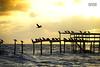 Some birds resting (wagnerm25) Tags: twilight trapiche tourism laranjal lake landscape lagoon light lagoa landmark lagoadospatos lago clouds cloudscape colors brazil dock deck dusk down dark beauty pelotas pier postcard