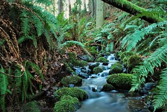 Unnamed stream in Western Washington (Seth D. Erickson) Tags: landscape stream moss nature outdoors wildlife washington western ferns water flowing