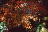 高尾山_14 (Taiwan's Riccardo) Tags: 2016 japan tokyo 135film fujifilmrdpiii transparency color plustek8200i rangefinder 日本 東京 zeissikoncontessa35 tessar fixed 45mmf28 高尾山 八王子 2016tokyovacation