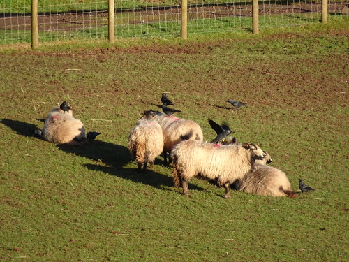 Greenmeadow Community Farm, Greenforge Way, Cwmbran 14 January 2017