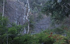 Ban de Bovernier (bulbocode909) Tags: valais suisse bovernier bandebovernier forêts arbres nature montagnes catogne vert hiver