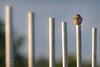 'This Is My Post' (benstaceyphotography) Tags: little owl wildlife north wales athene noctua winterwatch springwatch autumnwatch bird prey avian nikon ben stacey predator
