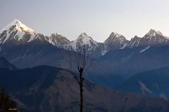 Munsiary morning. (draskd) Tags: munsiary panchachuli morning sunrise lonebird mountainscape himalayas india beautifulindia himalaya uttarakhand uttaranchal munsiyari