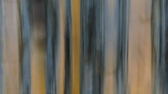 Stripes (Caroline Oades) Tags: rock rockface cliff cliffface lines stripes icm intentionalcameramovement