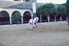 Doma XII ( Raquel ) Tags: horse horses caballo caballos animal animals doma tame horsetaming horseriding cordoba andalucia españa spain white whitehorse jinete trip travel beauty beautiful caballeriza