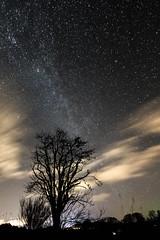 Aurora, Tree and a Sky Full of Stars 2 (amcgdesigns) Tags: andrewmcgavin arty dark drama forres lights local night northernlights stars trees winter rafford scotland unitedkingdom gb aurora tree starlight milkyway nighttime sky skyatnight lowlight eos7dmk2 canon1022mm merrydancers clouds