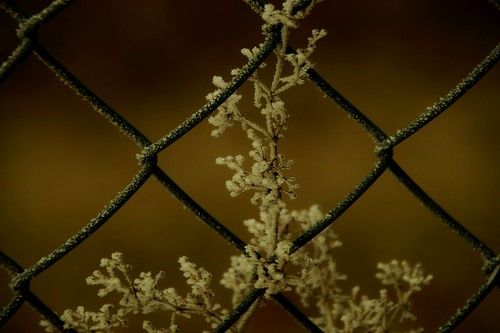 Frost am Maschendrahtzaun