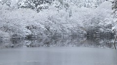 Frozen Reflections (maco-nonch★R(on/off)) Tags: kyoto ryoanji 京都 龍安寺 鏡容池 kyoyocchi pond frozen snow snowy reflection unescoworldheritagesite