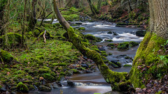 2017-01-17 Rivelin-7435.jpg (Elf Call) Tags: nikon rivelin river yorkshire water stream 18105 sheffield steppingstones waterfall d7200 blurred
