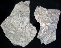 Limestone (Madison Limestone, Mississippian; Uintah County, Utah, USA) 1 (James St. John) Tags: limestone biogenic sedimentary rock calcite madison missippian uintah county utah