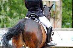IMG_1123 (dreiwn) Tags: horse pony pferde pferd equestrian horseback reiten horseriding dressage hnger 2015 reitturnier dressur pferdekopf dressuur junioren ridingarena pferdesport doublebridle reitplatz reitverein pferdehnger kandare turnierreiten dressurprfung ldressur