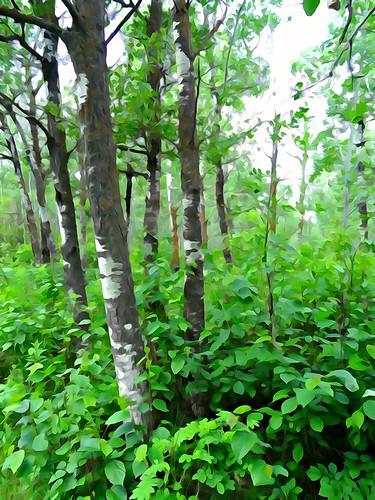 Alberta, Sturgeon County - Riverlot 56 - June 2015