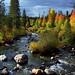 Colorful Aspens and Evergreens Along the Colorado River