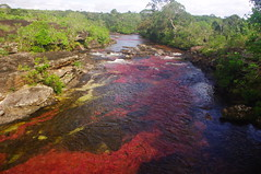 Cao Cristales, Excursion Day 4, Colombia (ARNAUD_Z_VOYAGE) Tags: pink red orange plants color colour green water colors yellow america river de landscape la site amazing rocks colombia colours view crystal south centro central cano rapids waterfalls riverbed huge colored aquatic spout region department quartzite centrale cao cristales coloration tableland serrania ecosystems variously clavigera cristalitos macarenia