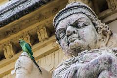 Awwk! Pieces Of Eight (gecko47) Tags: bird carving parakeet deity tamilnadu kanchipuram gopuram indianringneckedparakeet psittaculakrameri roseringedparakeet templeentrance ekambareswarartemple