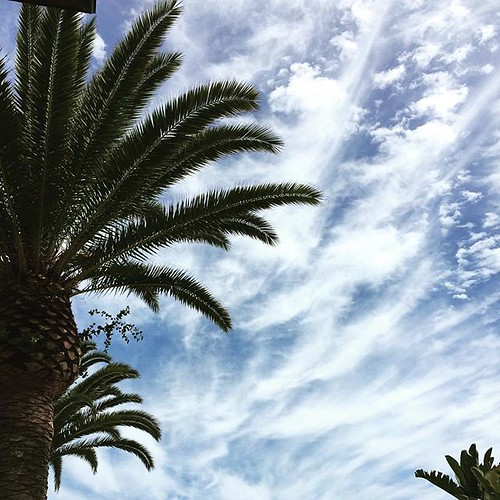 "#palmtrees #sky #gratitude take a moment to say #thank you"" this morning"