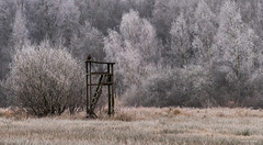 Rübke - Winterlandschaft 5 (Pana53) Tags: photographedbypana53 pana53 naturfoto naturundlandschaftsfotografie naturfotografie jahreszeit wintertime winter winterlandschaft winterlandscape rübke bäume pflanzen natur wiesen felder nikon nikond810 raureif eis frost kälte outdoor bussard greifvogel raubvogel hochsitz
