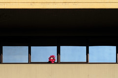 Cyclamen (Alfredo Liverani) Tags: canong5x canon g5x europa italia italy italien italie emiliaromagna romagna faenza faventia faience faenza2016 fiori fiore flower flowers finestra finestre window windows fenster minimalismo minimalism minimal lessismore
