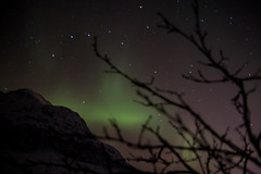 Aurora and branches (Davescunningplan) Tags: aurora northern lights greem branches twigs mountain tromso norway silhouette stars constellation plough bigdipper