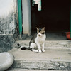 R1-09 (redefined0307) Tags: cats feliuscatus mediumformat zenzabronicas2 zenzabronica bronicas2 kodakportra160 portra160 hongkong meow filmphotography 香港 猫 貓