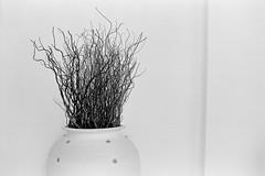 Pot - Eastman Double X (magnus.joensson) Tags: arabia oman muscat contax rx zeiss planar 50mm cy kodak eastman doublex xtol 11
