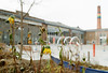 Autumn's End (Georgie_grrl) Tags: wychwoodartbarns autumn wandering stclairwestarea pentaxk1000 rikenon12828mm toronto ontario garden flowers wilted dying decay yellow beauty