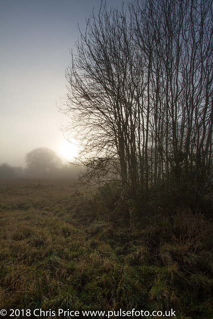 A Foggy Day in Bramley