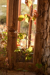 fenêtre rurex (nadineblanchard) Tags: natuer fenêtre vitre rurex