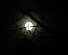 Moon On A Friday Night. (dccradio) Tags: lumberton nc northcarolina robesoncounty moon night dark evening fullmoon lunar lunareclipse stargazing penumbral eclipse round circle tree trees branches treelimbs