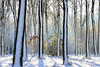 Sunny Winter (larsvandegoor.com) Tags: winter