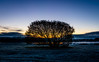 The Tree (Rich Walker75) Tags: tree trees sunrise dawn morning frosty frost landsape landscapes landscape winter silhouette plymouth devon uk canon photography eos100d efs1585mmisusm